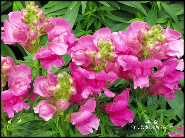 大安森林公園_129.jpg