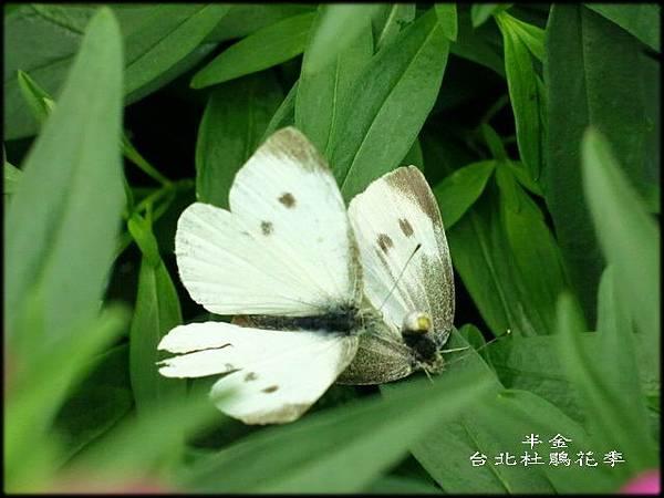 大安森林公園_125.jpg