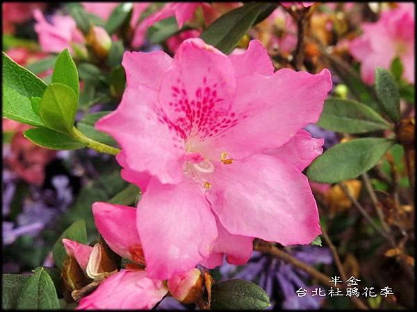 大安森林公園_141.jpg