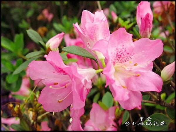 大安森林公園_140.jpg