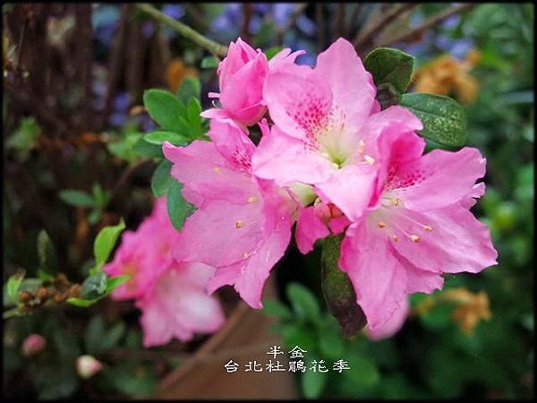 大安森林公園_142.jpg