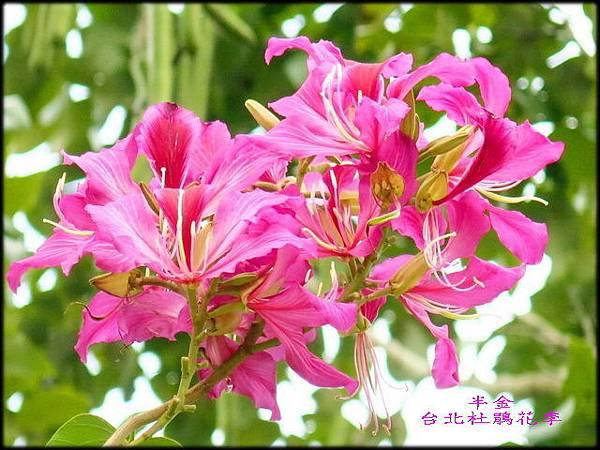 大安森林公園_144.jpg