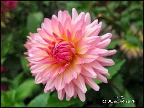 大安森林公園_159.jpg