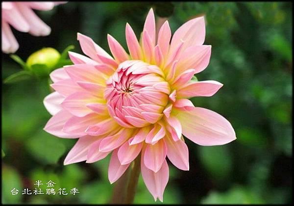 大安森林公園_160.jpg