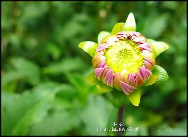 大安森林公園_163.jpg
