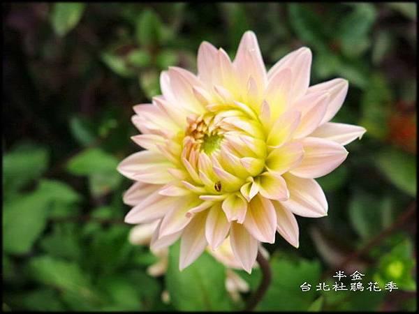 大安森林公園_167.jpg