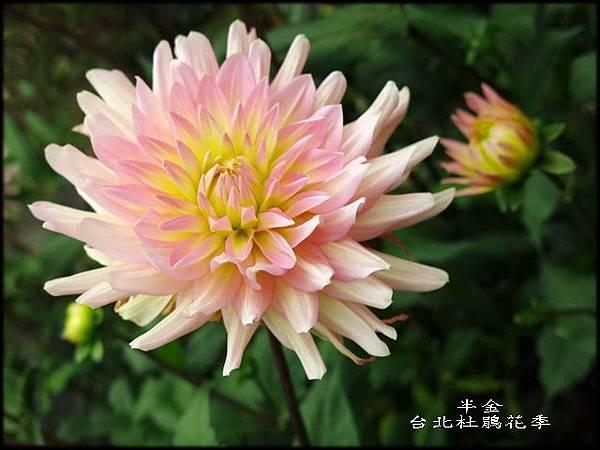 大安森林公園_169.jpg
