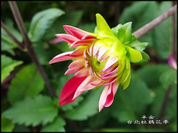 大安森林公園_166.jpg