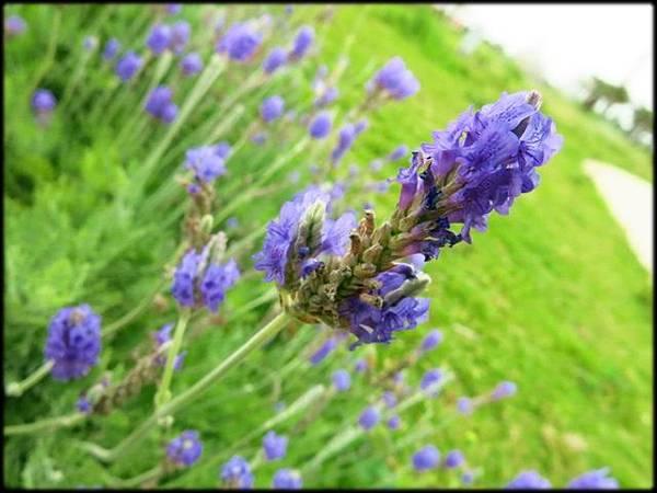 桃園農業博覽_169.jpg