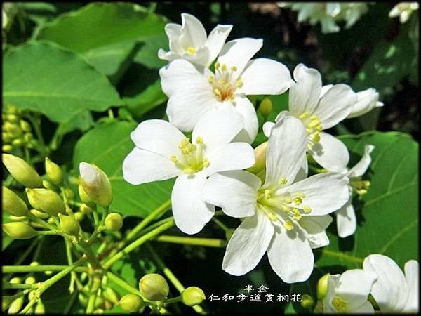 湖口仁和步道_028.jpg