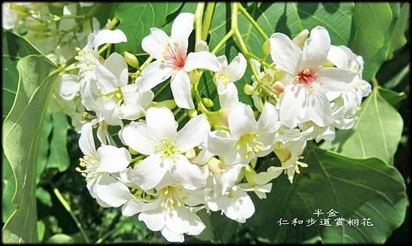 湖口仁和步道_042.jpg
