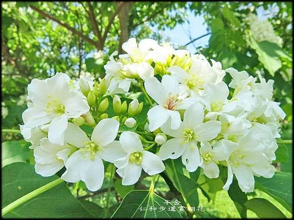 湖口仁和步道_075.jpg