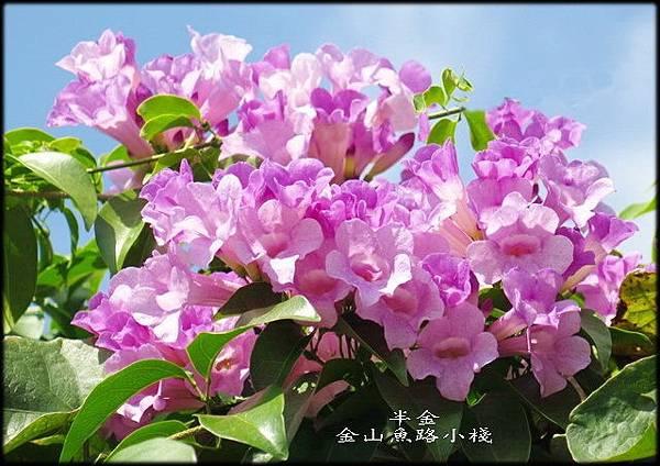 金山魚路小棧_012.jpg