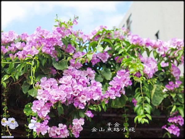 金山魚路小棧_023.jpg