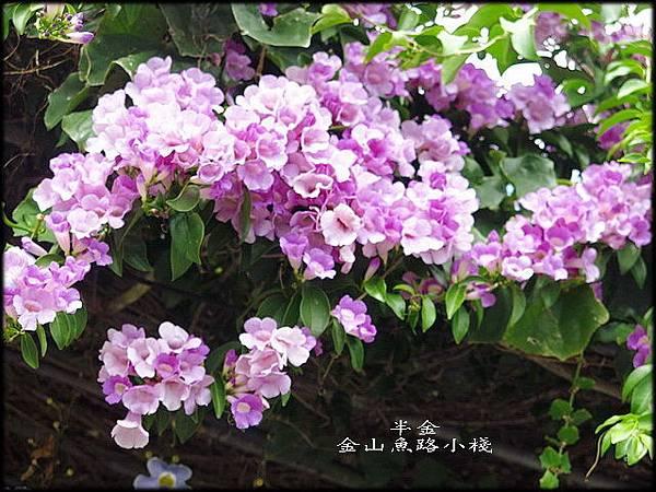 金山魚路小棧_022.jpg