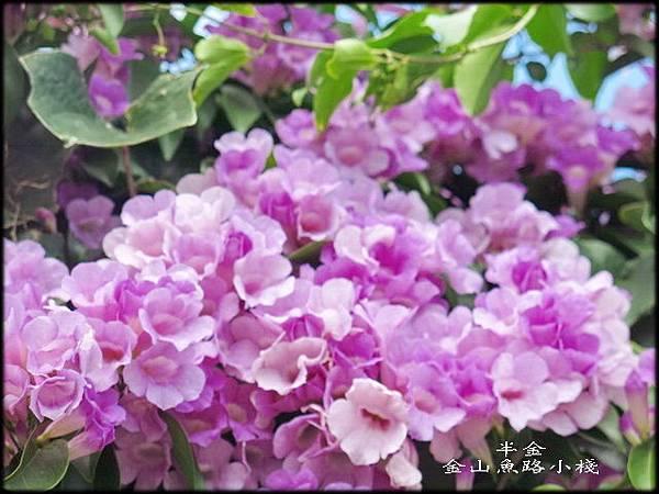 金山魚路小棧_032.jpg