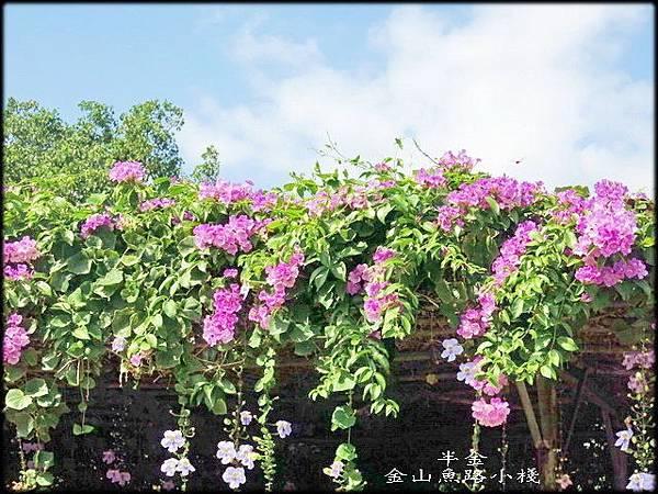 金山魚路小棧_044.jpg