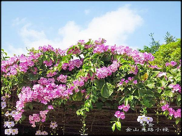 金山魚路小棧_043.jpg