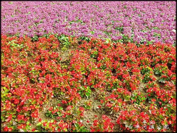 古亭河濱公園_062.jpg