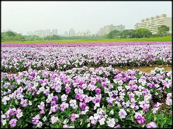 古亭河濱公園紫色花海-2_049.jpg