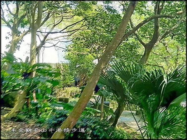 觀音山牛港稜步道-1_054.jpg
