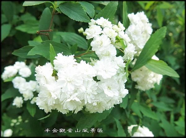觀音山牛港稜步道_010.jpg