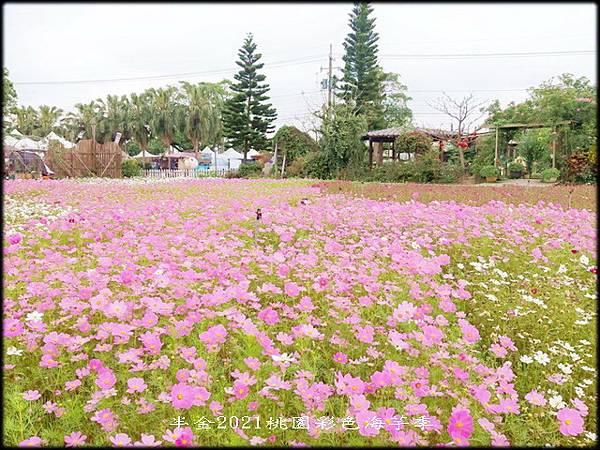 2021桃園彩色海芋季-3_031.jpg