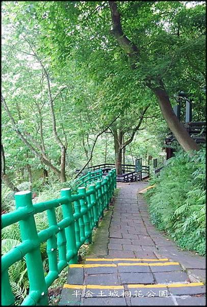 土城桐花公園_007.jpg