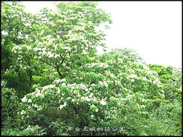 土城桐花公園_025.jpg