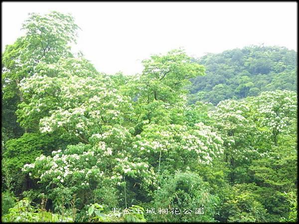 土城桐花公園_022.jpg