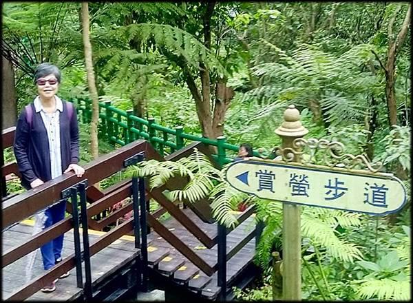 土城桐花公園-1_007.jpg