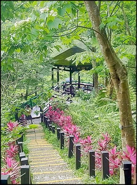土城桐花公園-1_012.jpg