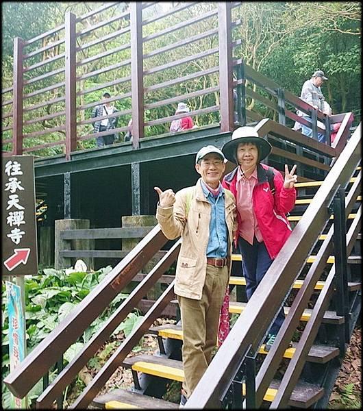 土城桐花公園-2_011.jpg