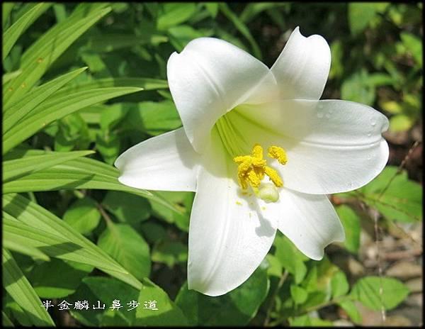 麟山鼻步道_054.jpg