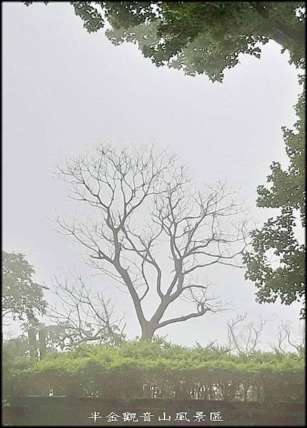雨天的觀音山風景區~022.jpg