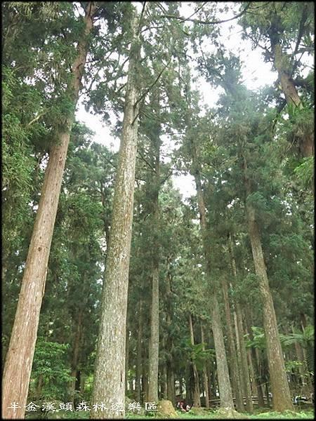 溪頭森林遊樂區_006.jpg