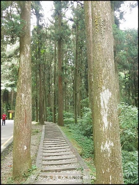 溪頭森林遊樂區_007.jpg