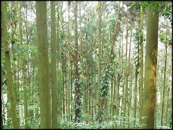 溪頭森林遊樂區_009.jpg