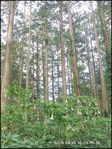 溪頭森林遊樂區_015.jpg