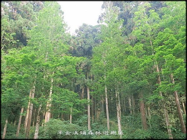 溪頭森林遊樂區_019.jpg