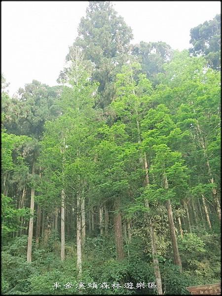 溪頭森林遊樂區_020.jpg