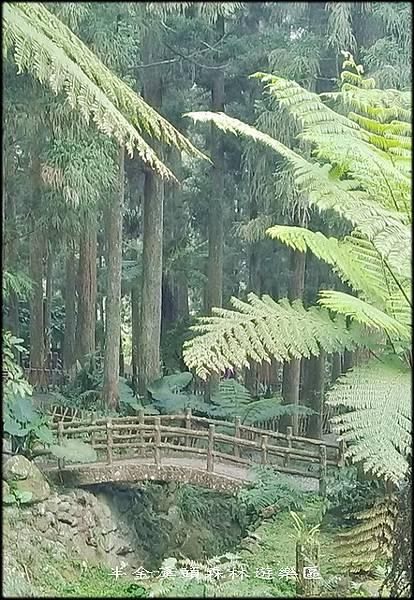 溪頭森林遊樂區-1_002.jpg