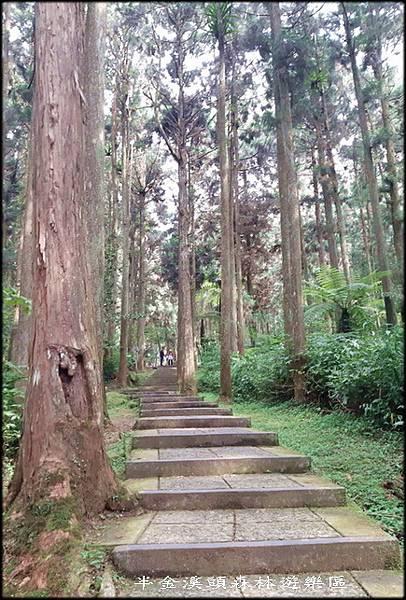 溪頭森林遊樂區-3_005.jpg