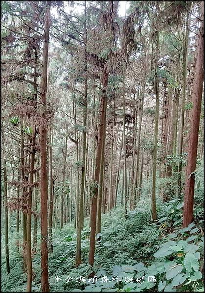溪頭森林遊樂區-3_044.jpg