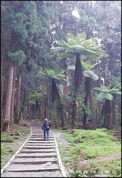 溪頭森林遊樂區-4_031.jpg