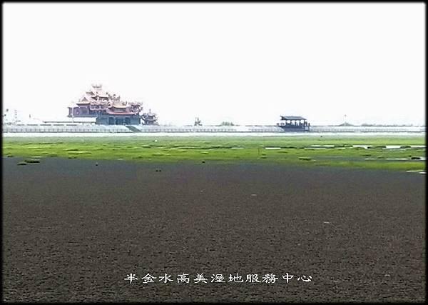 清水高美溼地-1_004.jpg