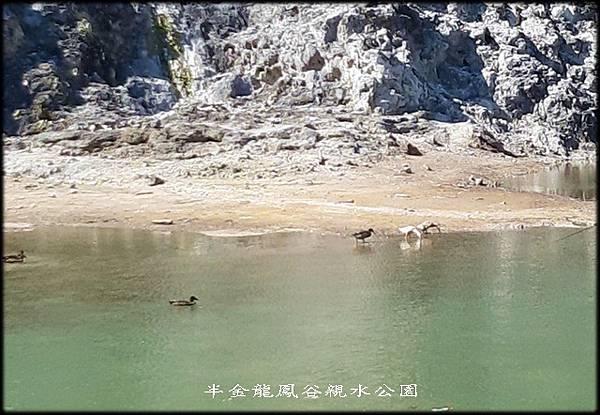 龍鳳谷親水公園_013.jpg