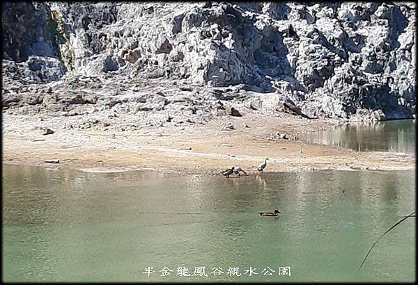 龍鳳谷親水公園_014.jpg