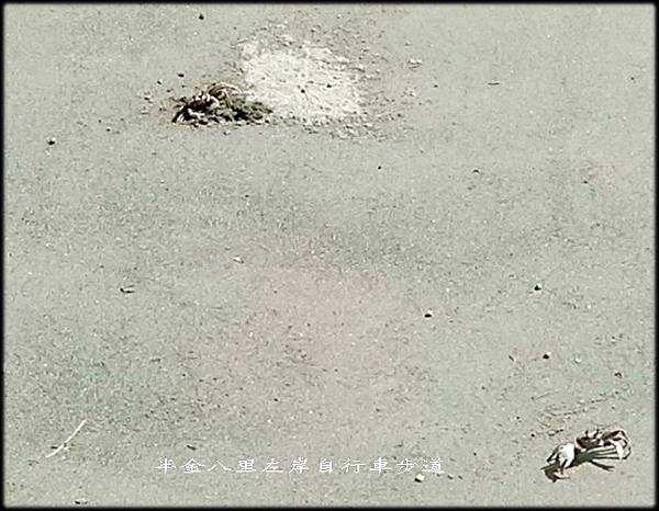 八里左岸自行車步道-1_030.jpg