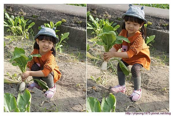 3Y8M-拔蘿蔔.jpg